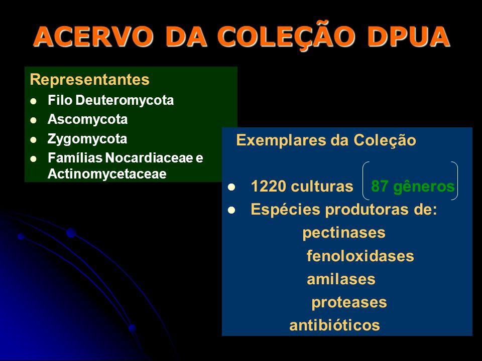 ACERVO DA COLEÇÃO DPUA Representantes Filo Deuteromycota Ascomycota Zygomycota Famílias Nocardiaceae e Actinomycetaceae Exemplares da Coleção 1220 cul
