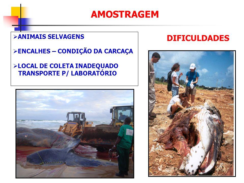 AMOSTRAGEM ANIMAIS SELVAGENS ENCALHES – CONDIÇÃO DA CARCAÇA LOCAL DE COLETA INADEQUADO TRANSPORTE P/ LABORATÓRIO DIFICULDADES