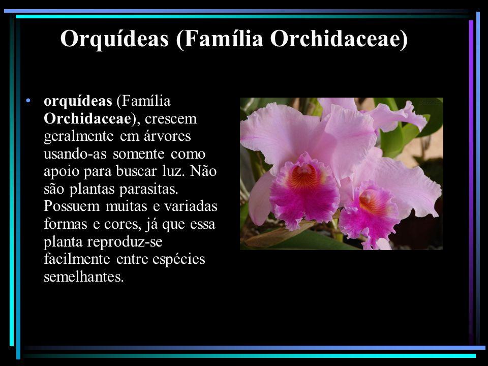 Orquídeas (Família Orchidaceae) orquídeas (Família Orchidaceae), crescem geralmente em árvores usando-as somente como apoio para buscar luz. Não são p