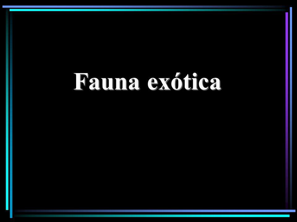 Fauna exótica