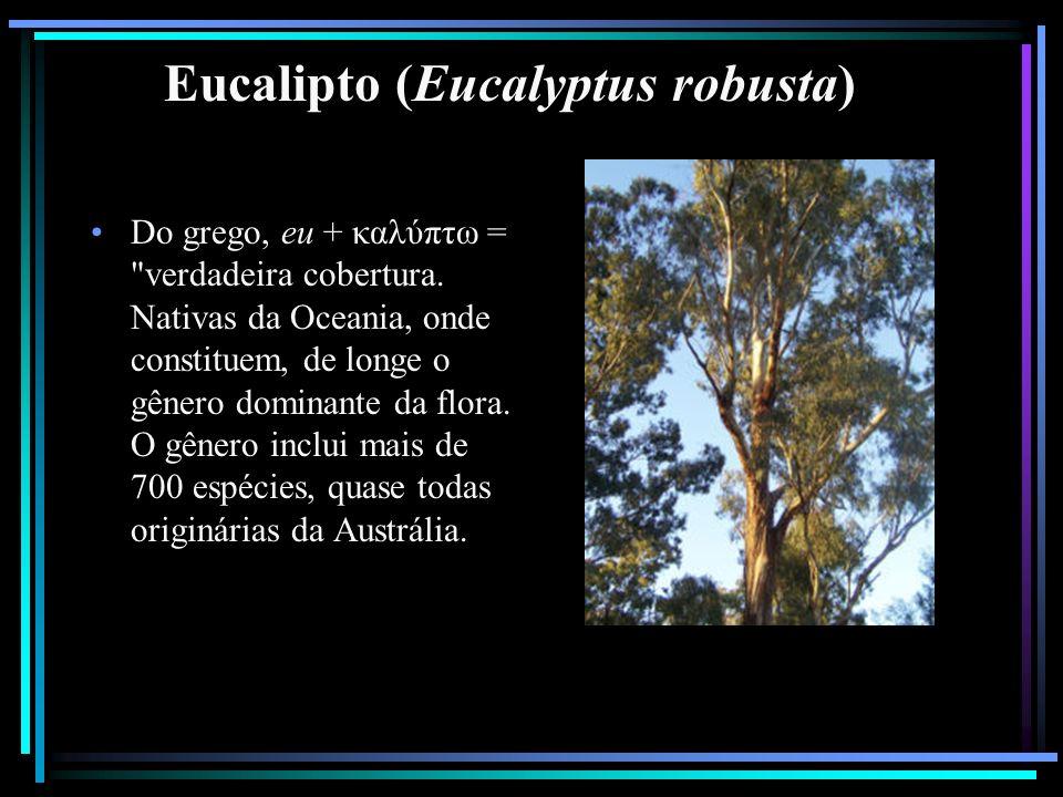 Eucalipto (Eucalyptus robusta) Do grego, eu + καλύπτω =