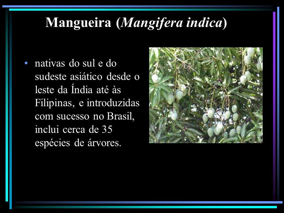 Mangueira (Mangifera indica) nativas do sul e do sudeste asiático desde o leste da Índia até às Filipinas, e introduzidas com sucesso no Brasil, inclu