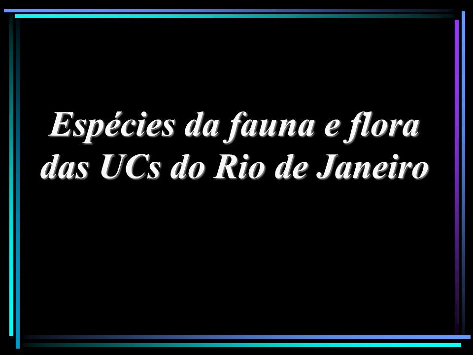 Espécies da fauna e flora das UCs do Rio de Janeiro