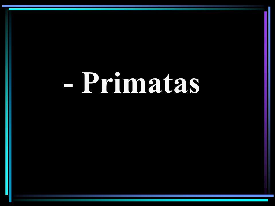 - Primatas