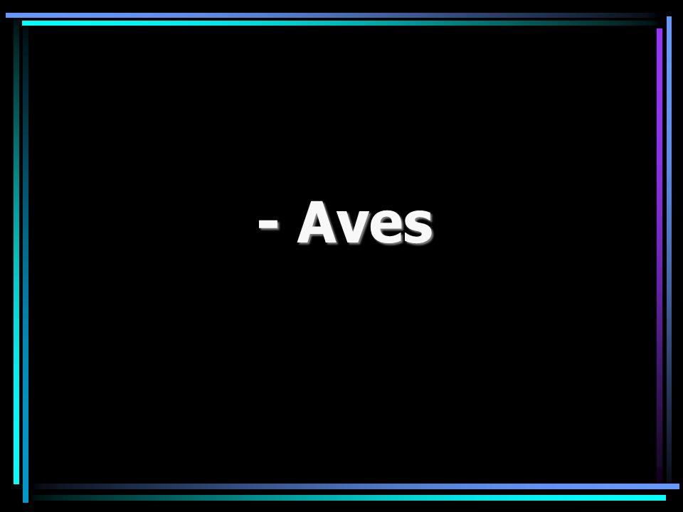- Aves