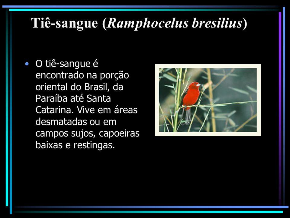 Tiê-sangue (Ramphocelus bresilius) O tiê-sangue é encontrado na porção oriental do Brasil, da Paraíba até Santa Catarina. Vive em áreas desmatadas ou