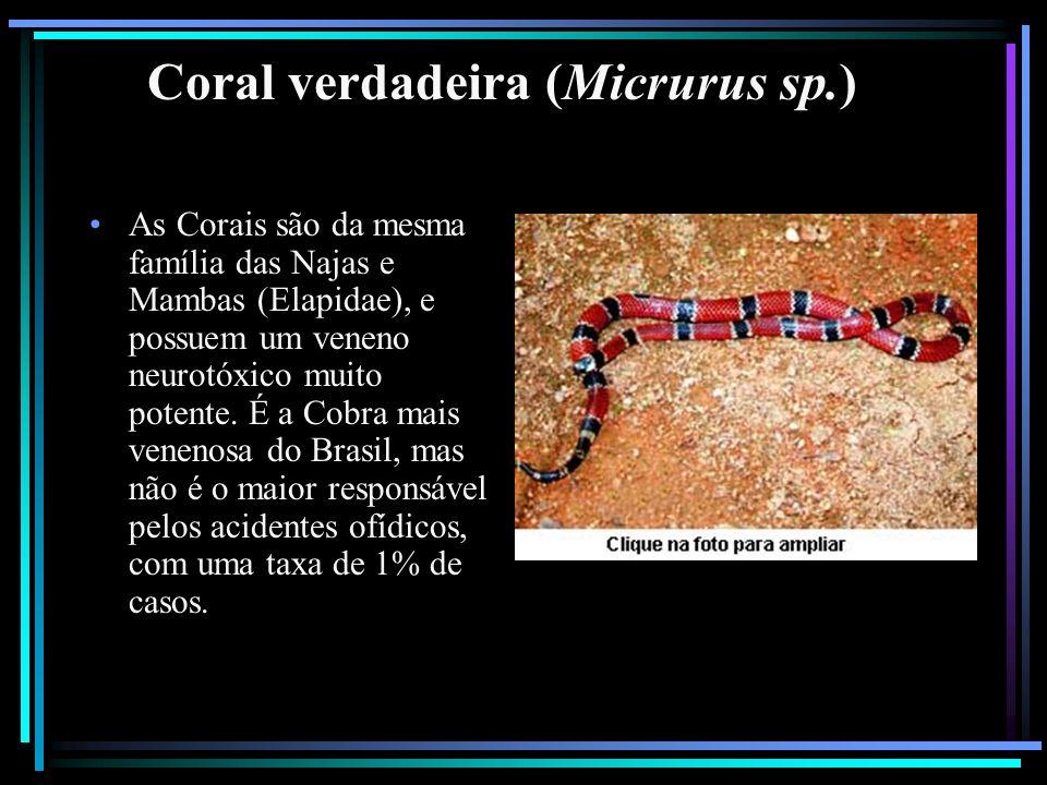 Coral verdadeira (Micrurus sp.) As Corais são da mesma família das Najas e Mambas (Elapidae), e possuem um veneno neurotóxico muito potente. É a Cobra