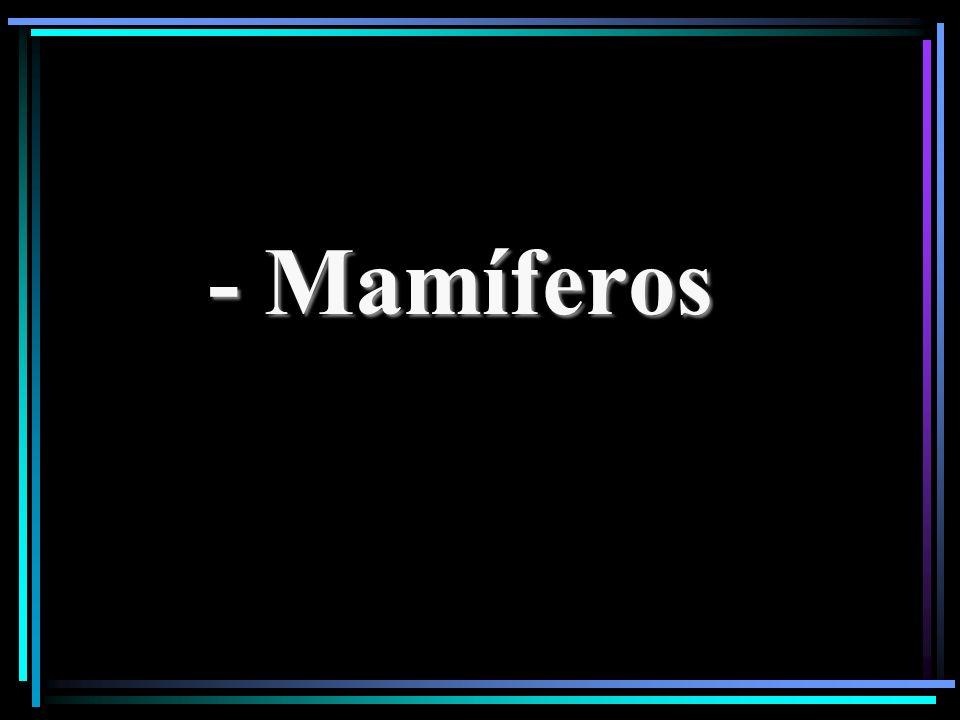 - Mamíferos