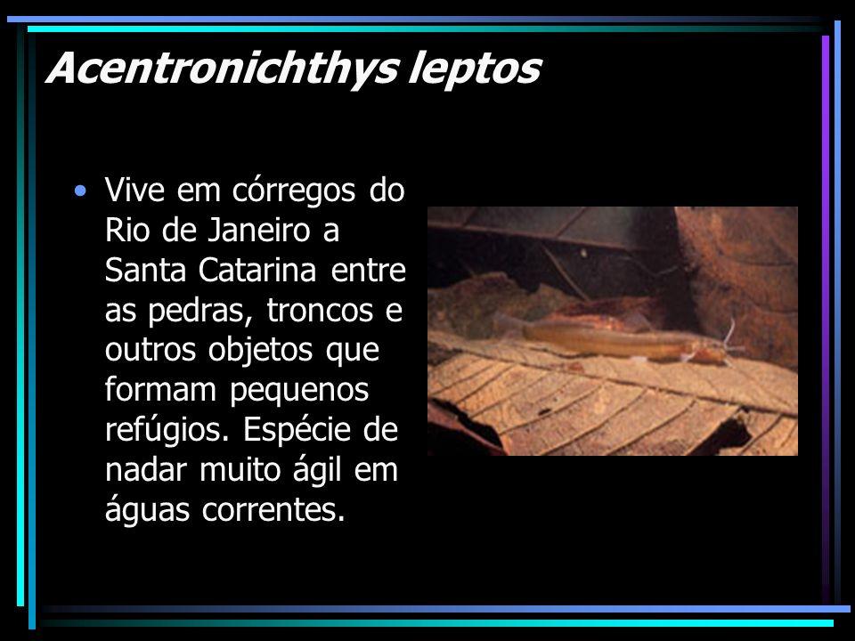 Acentronichthys leptos Vive em córregos do Rio de Janeiro a Santa Catarina entre as pedras, troncos e outros objetos que formam pequenos refúgios. Esp
