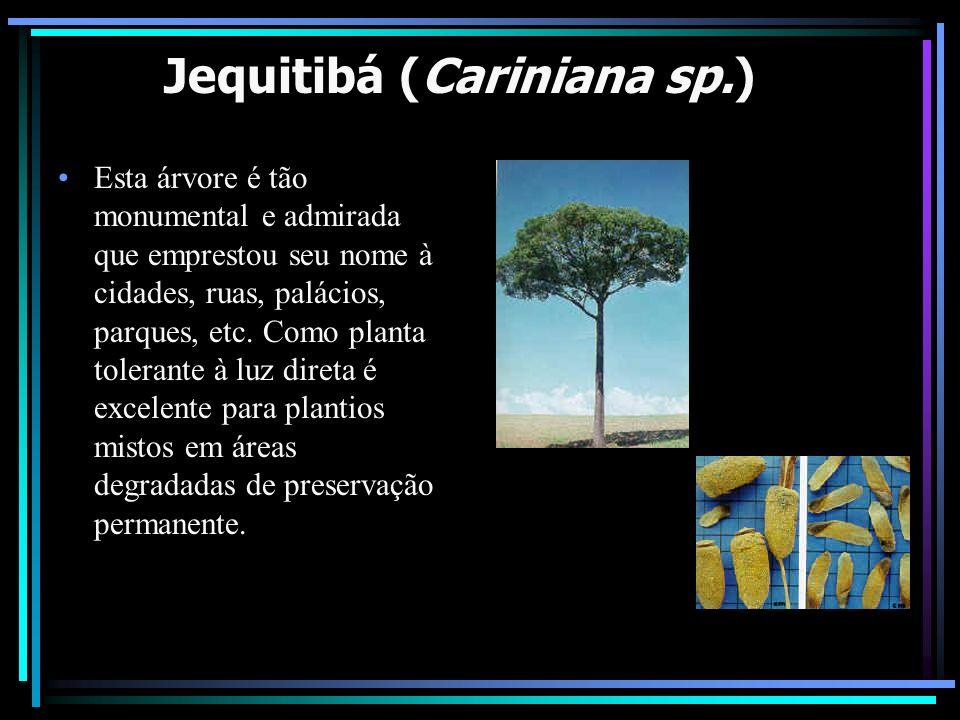 Jequitibá (Cariniana sp.) Esta árvore é tão monumental e admirada que emprestou seu nome à cidades, ruas, palácios, parques, etc. Como planta tolerant