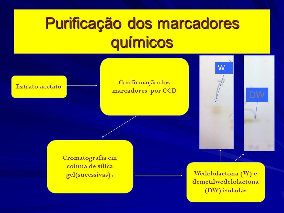 Isolamento dos marcadores químicos Coleta da planta Secagem e trituração Preparação do extrato metanólico Extração com acetato de etila concentração D