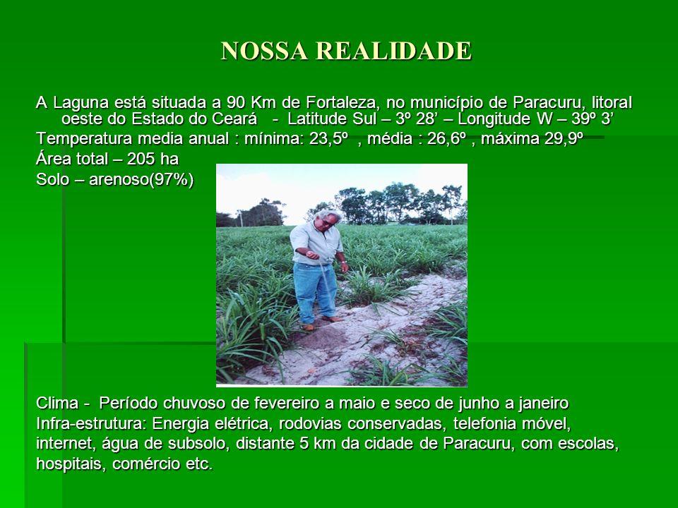 NOSSA REALIDADE A Laguna está situada a 90 Km de Fortaleza, no município de Paracuru, litoral oeste do Estado do Ceará - Latitude Sul – 3º 28 – Longitude W – 39º 3 Temperatura media anual : mínima: 23,5º, média : 26,6º, máxima 29,9º Área total – 205 ha Solo – arenoso(97%) Clima - Período chuvoso de fevereiro a maio e seco de junho a janeiro Infra-estrutura: Energia elétrica, rodovias conservadas, telefonia móvel, internet, água de subsolo, distante 5 km da cidade de Paracuru, com escolas, hospitais, comércio etc.