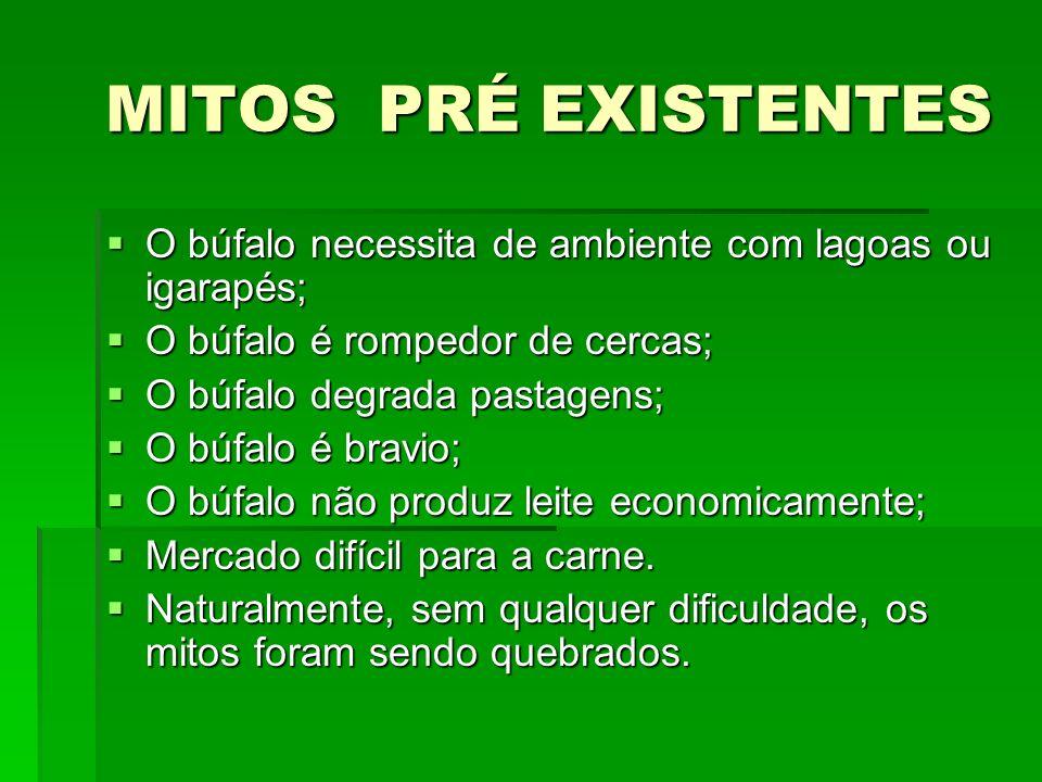 MITOS PRÉ EXISTENTES MITOS PRÉ EXISTENTES O búfalo necessita de ambiente com lagoas ou igarapés; O búfalo necessita de ambiente com lagoas ou igarapés; O búfalo é rompedor de cercas; O búfalo é rompedor de cercas; O búfalo degrada pastagens; O búfalo degrada pastagens; O búfalo é bravio; O búfalo é bravio; O búfalo não produz leite economicamente; O búfalo não produz leite economicamente; Mercado difícil para a carne.