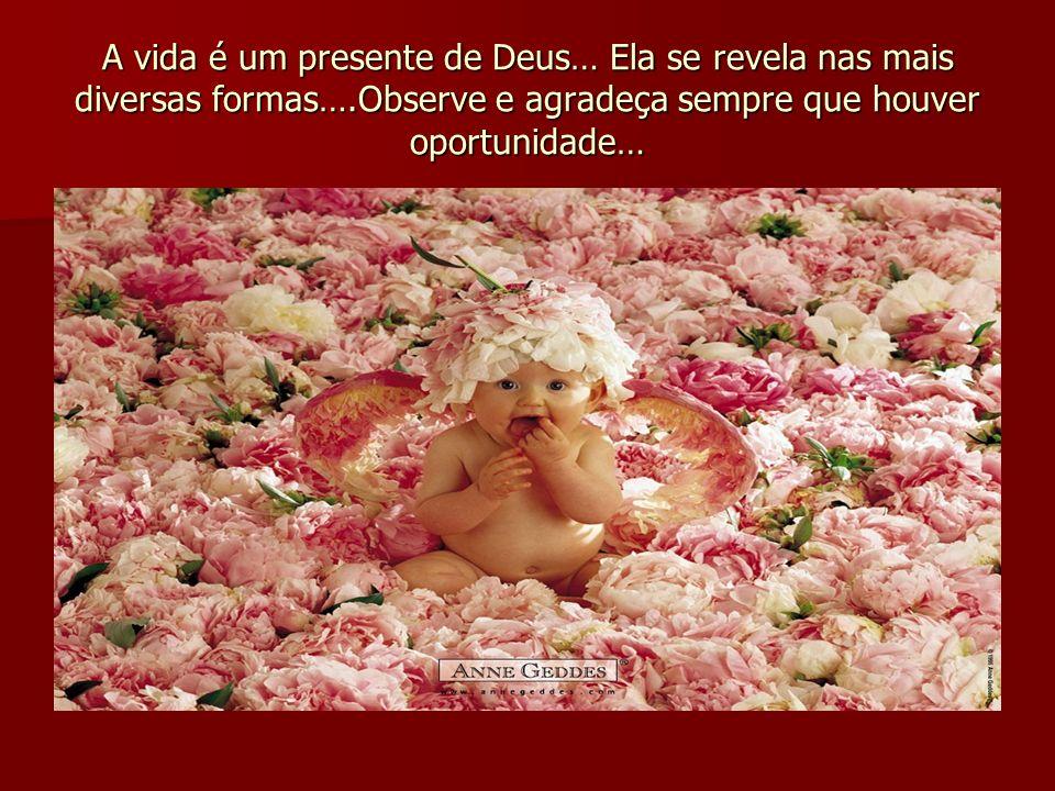 A vida é um presente de Deus… Ela se revela nas mais diversas formas….Observe e agradeça sempre que houver oportunidade…
