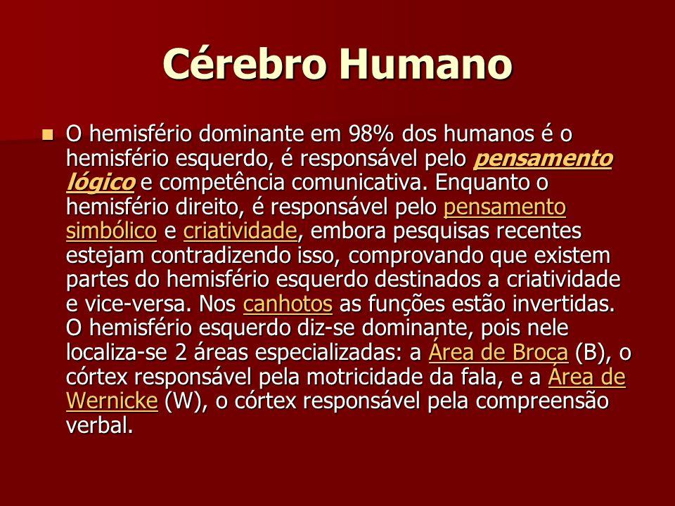 Cérebro Humano O hemisfério dominante em 98% dos humanos é o hemisfério esquerdo, é responsável pelo pensamento lógico e competência comunicativa.