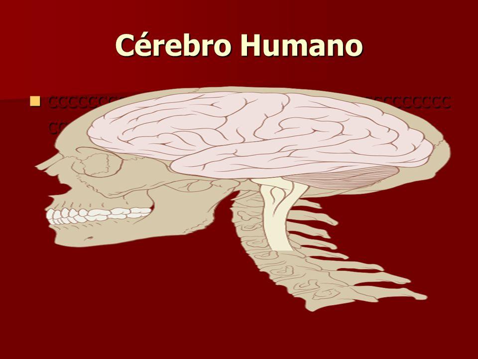 Cérebro Humano ccccccccccccccccccccccccccccccccccccccccc cccccccc ccccccccccccccccccccccccccccccccccccccccc cccccccc