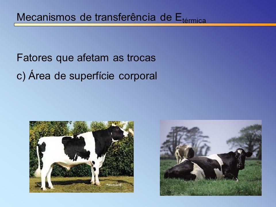 Mecanismos de transferência de E térmica Fatores que afetam as trocas c) Área de superfície corporal