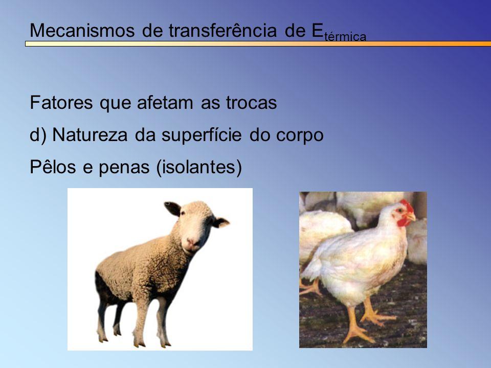 Mecanismos de transferência de E térmica Fatores que afetam as trocas d) Natureza da superfície do corpo Pêlos e penas (isolantes)