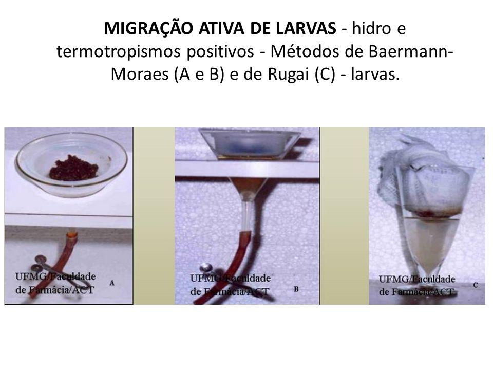 MIGRAÇÃO ATIVA DE LARVAS - hidro e termotropismos positivos - Métodos de Baermann- Moraes (A e B) e de Rugai (C) - larvas.