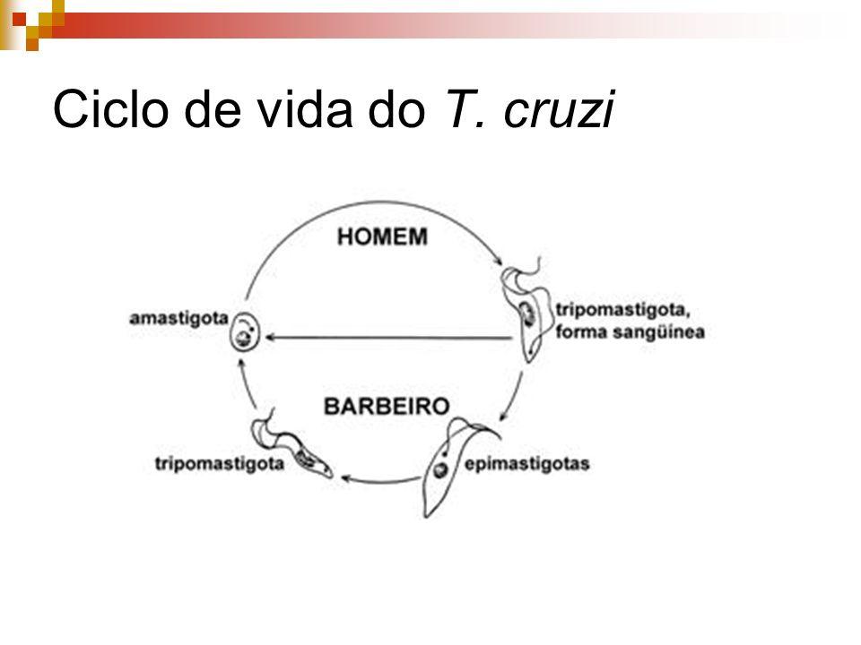 Ciclo de vida do T. cruzi