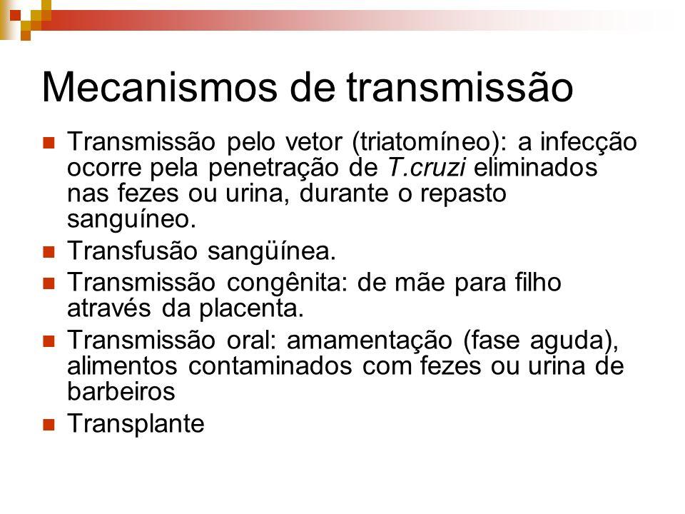 Mecanismos de transmissão Transmissão pelo vetor (triatomíneo): a infecção ocorre pela penetração de T.cruzi eliminados nas fezes ou urina, durante o