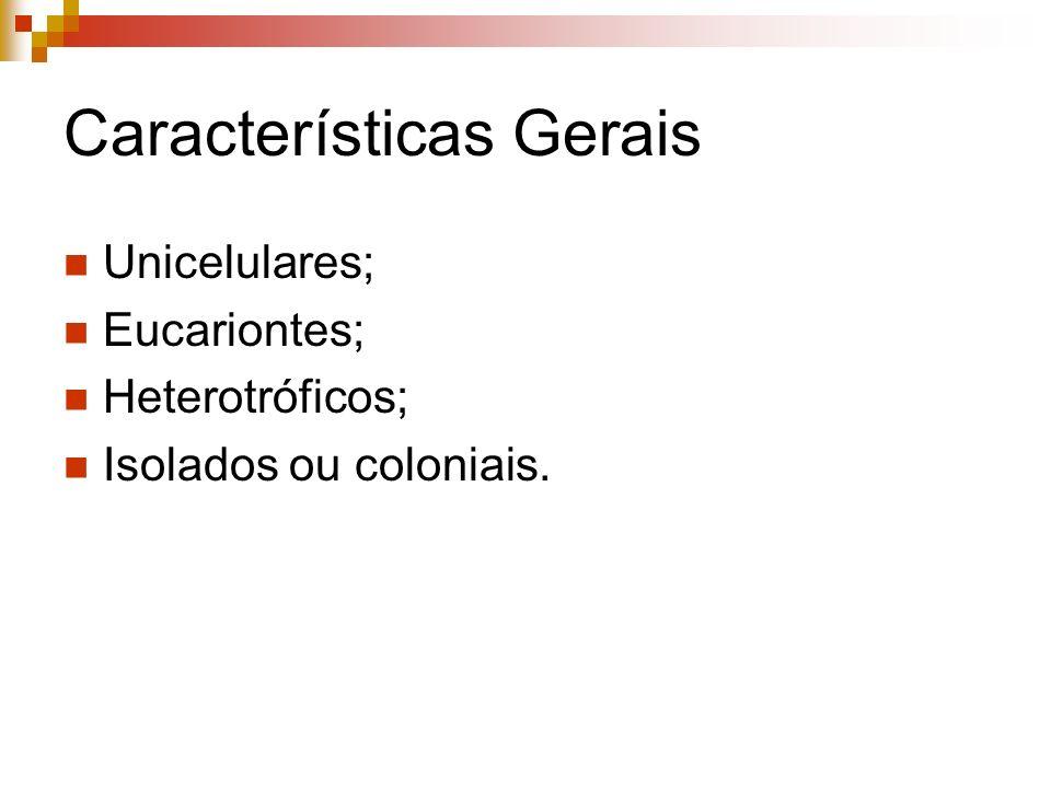 Características Gerais Unicelulares; Eucariontes; Heterotróficos; Isolados ou coloniais.
