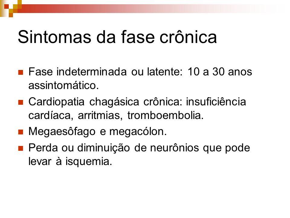 Sintomas da fase crônica Fase indeterminada ou latente: 10 a 30 anos assintomático. Cardiopatia chagásica crônica: insuficiência cardíaca, arritmias,