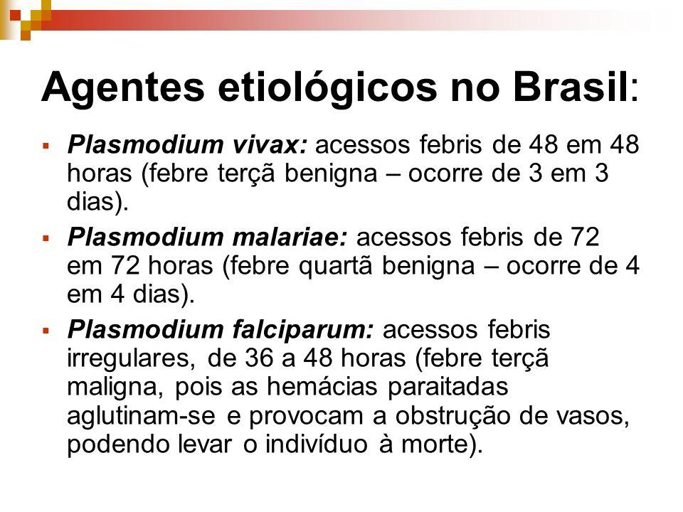 Agentes etiológicos no Brasil: Plasmodium vivax: acessos febris de 48 em 48 horas (febre terçã benigna – ocorre de 3 em 3 dias). Plasmodium malariae: