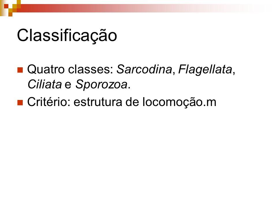 Classificação Quatro classes: Sarcodina, Flagellata, Ciliata e Sporozoa. Critério: estrutura de locomoção.m