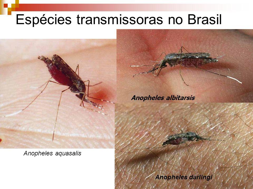 Espécies transmissoras no Brasil Anopheles aquasalis Anopheles albitarsis Anopheles darlingi