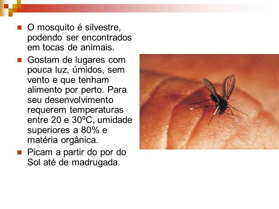 O mosquito é silvestre, podendo ser encontrados em tocas de animais. Gostam de lugares com pouca luz, úmidos, sem vento e que tenham alimento por pert
