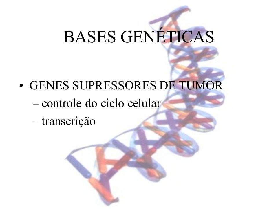 BASES GENÉTICAS GENES SUPRESSORES DE TUMOR –controle do ciclo celular –transcrição