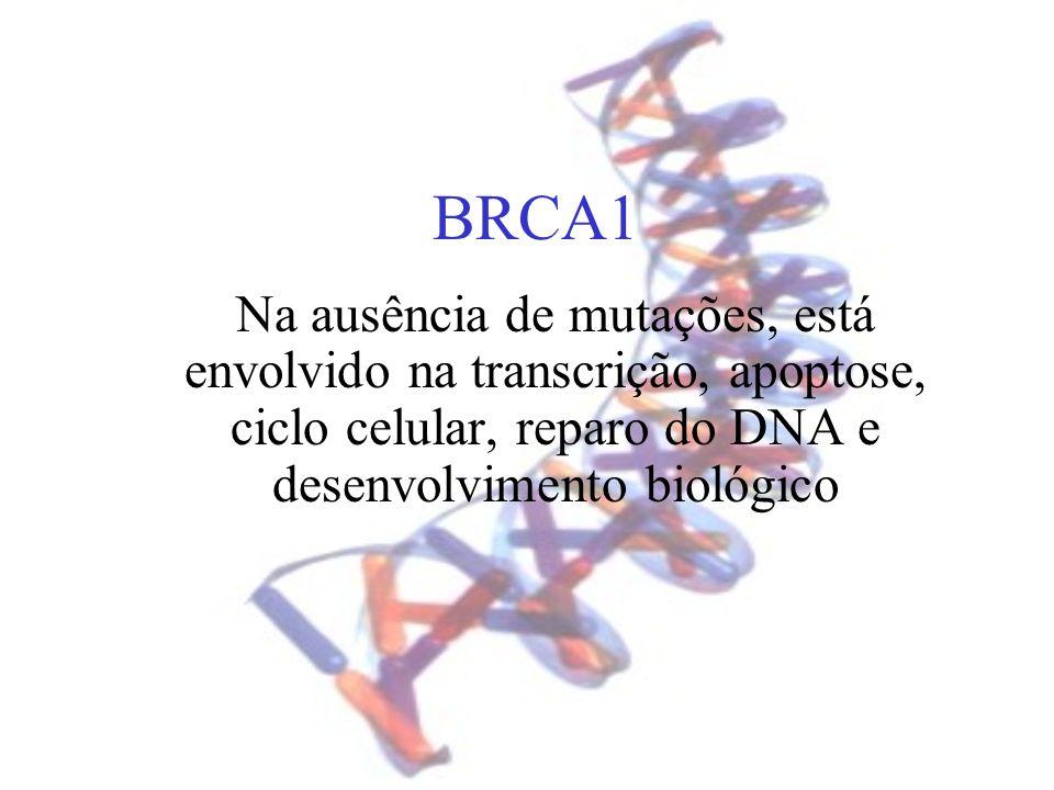 BRCA1 Na ausência de mutações, está envolvido na transcrição, apoptose, ciclo celular, reparo do DNA e desenvolvimento biológico