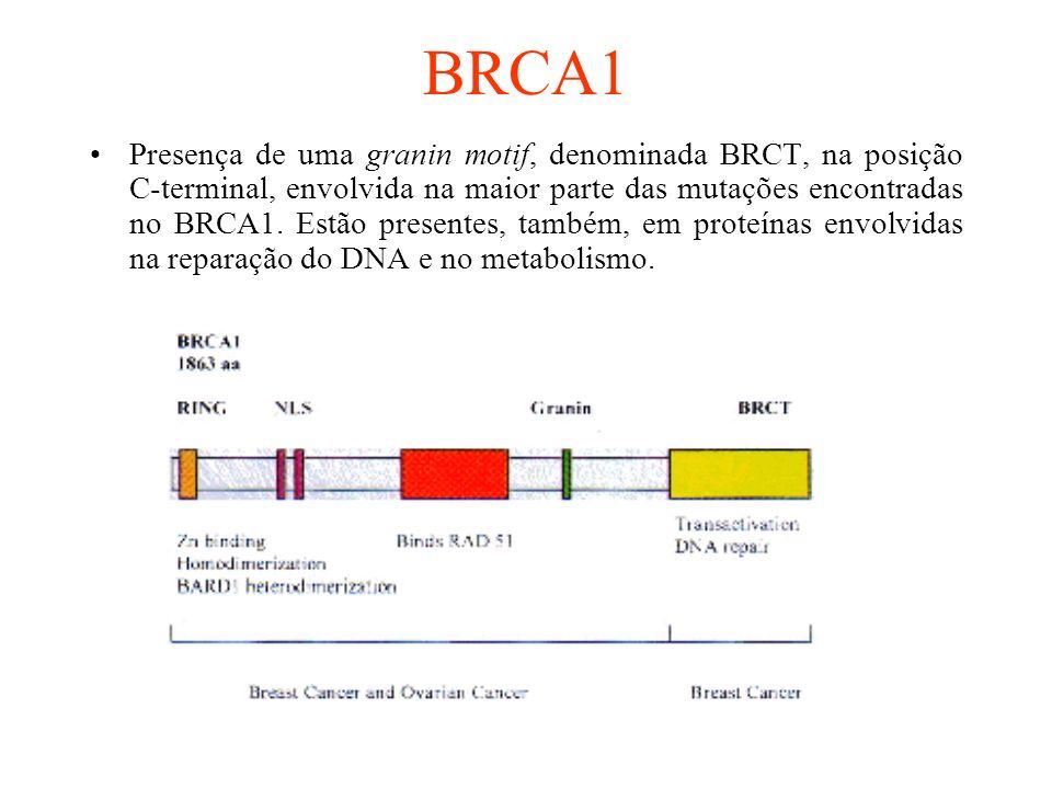 BRCA1 Presença de uma granin motif, denominada BRCT, na posição C-terminal, envolvida na maior parte das mutações encontradas no BRCA1. Estão presente