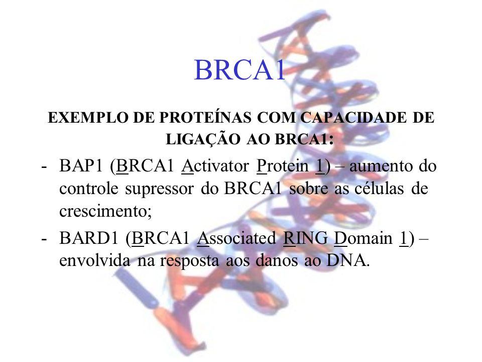 BRCA1 EXEMPLO DE PROTEÍNAS COM CAPACIDADE DE LIGAÇÃO AO BRCA1 : -BAP1 (BRCA1 Activator Protein 1) – aumento do controle supressor do BRCA1 sobre as cé