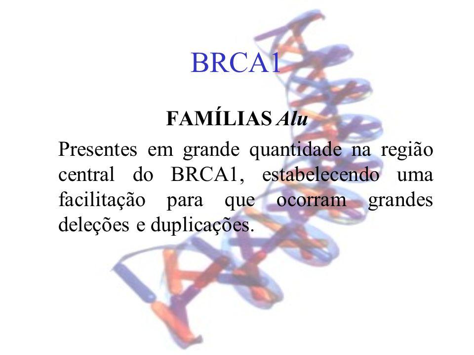 BRCA1 FAMÍLIAS Alu Presentes em grande quantidade na região central do BRCA1, estabelecendo uma facilitação para que ocorram grandes deleções e duplic