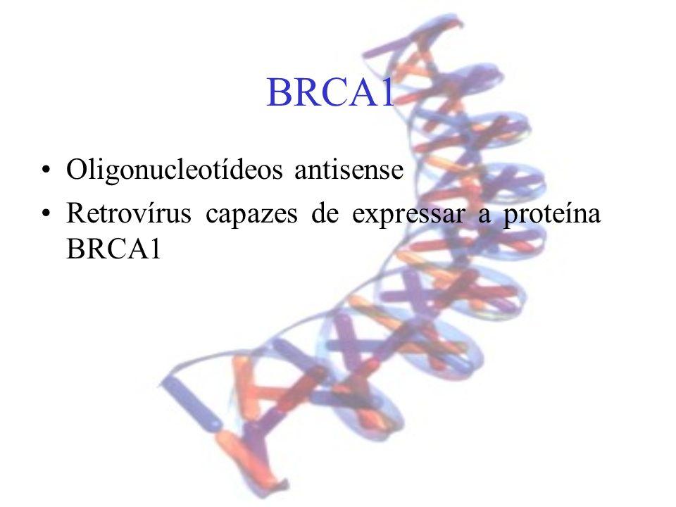 BRCA1 Oligonucleotídeos antisense Retrovírus capazes de expressar a proteína BRCA1