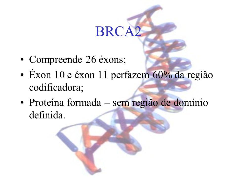 BRCA2 Compreende 26 éxons; Éxon 10 e éxon 11 perfazem 60% da região codificadora; Proteína formada – sem região de domínio definida.