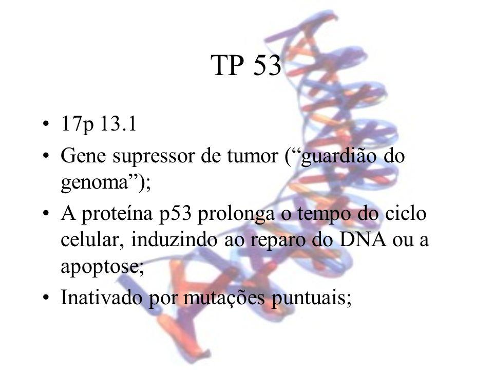 TP 53 17p 13.1 Gene supressor de tumor (guardião do genoma); A proteína p53 prolonga o tempo do ciclo celular, induzindo ao reparo do DNA ou a apoptos