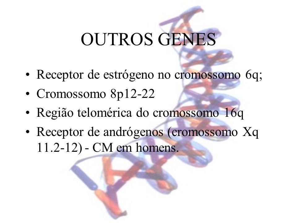 OUTROS GENES Receptor de estrógeno no cromossomo 6q; Cromossomo 8p12-22 Região telomérica do cromossomo 16q Receptor de andrógenos (cromossomo Xq 11.2