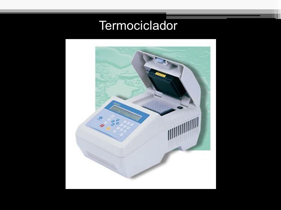 Detecção da Amplificação Produto (PCR ou RT-PCR) Eletroforese em gel de poliacrilamida