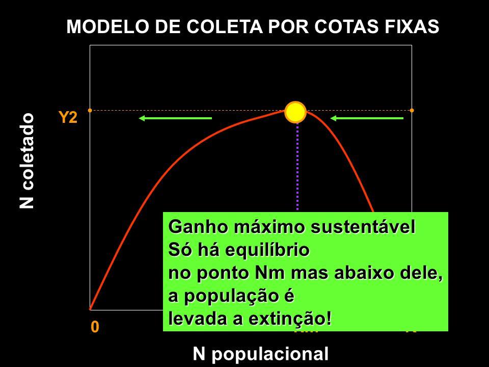 N populacional MODELO DE COLETA POR COTAS FIXAS Y1 Y2 Y3 0 Nm K Taxa de recrutamento Taxa de coleta N coletado Ganho máximo sustentável Só há equilíbr