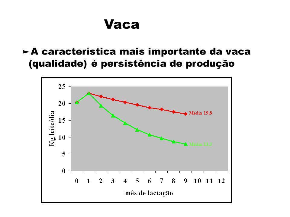Vaca A característica mais importante da vaca (qualidade) é persistência de produção Média 19,8 Média 13,3