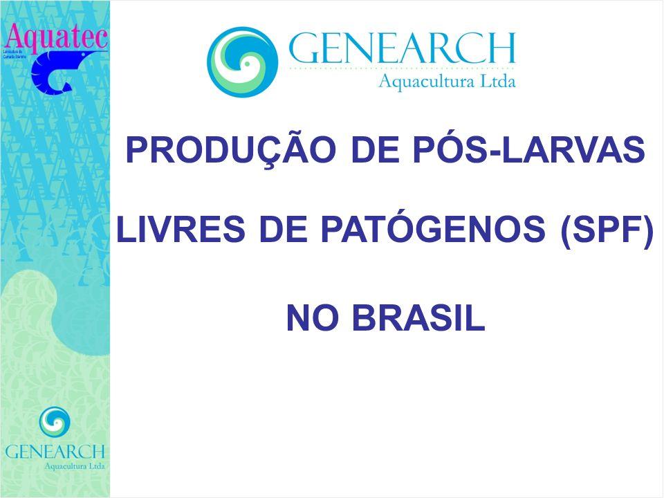 PRODUÇÃO DE PÓS-LARVAS LIVRES DE PATÓGENOS (SPF) NO BRASIL