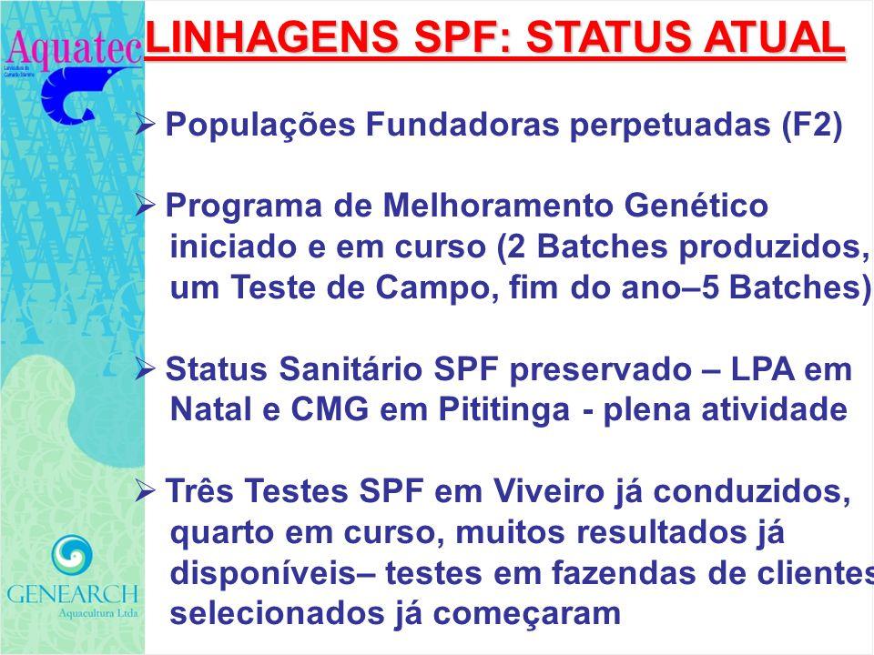 LINHAGENS SPF: STATUS ATUAL Populações Fundadoras perpetuadas (F2) Programa de Melhoramento Genético iniciado e em curso (2 Batches produzidos, um Tes
