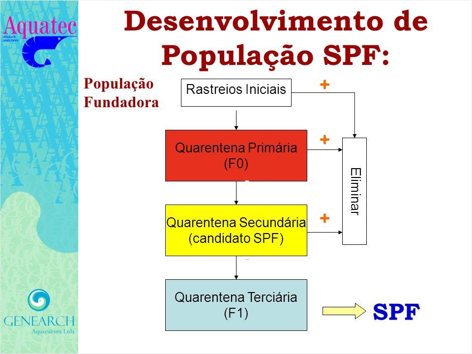 População Fundadora Quarentena Primária (F0) Quarentena Secundária (candidato SPF) Quarentena Terciária (F1) Rastreios Iniciais Eliminar - + - + + SPF