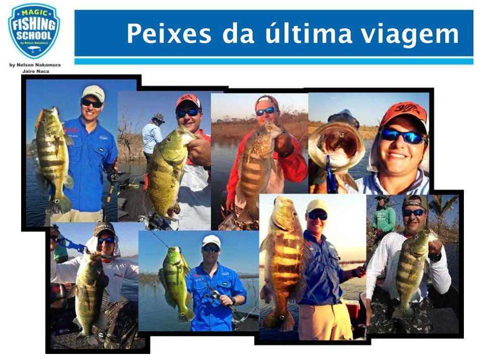 Peixes da última viagem