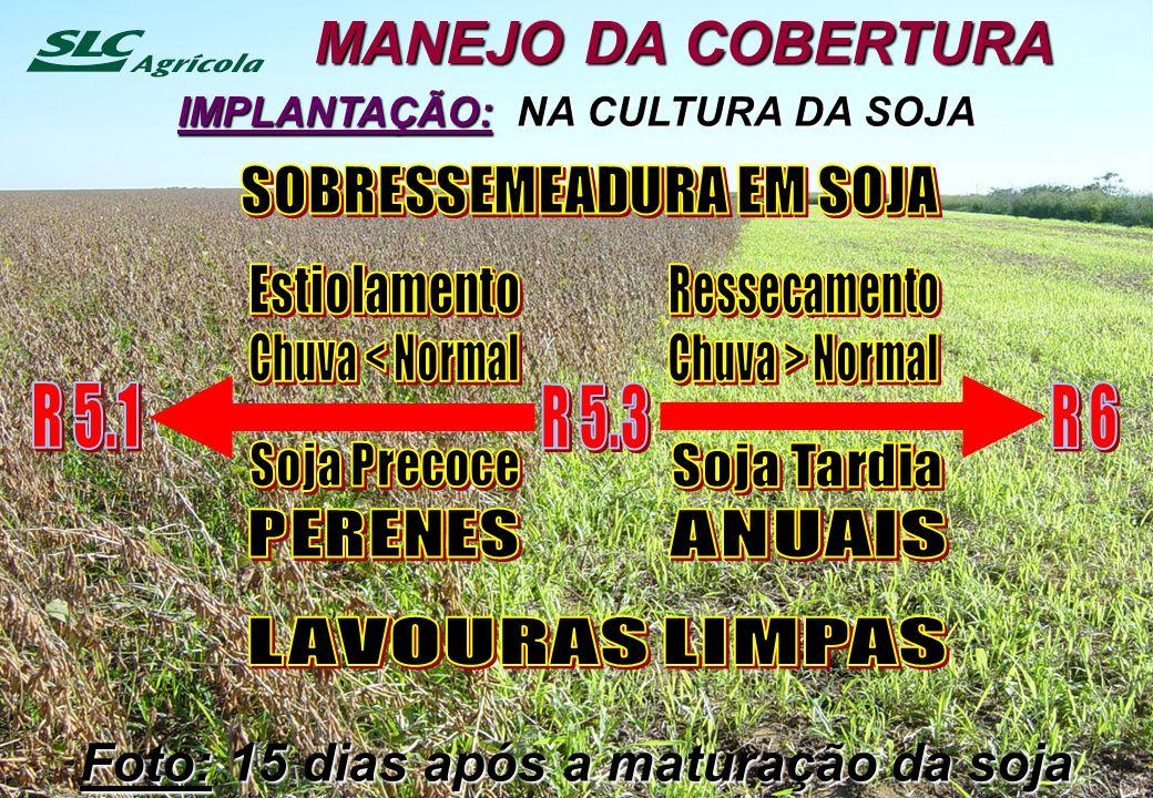 IMPLANTAÇÃO: NA CULTURA DA SOJA MANEJO DA COBERTURA Foto: 15 dias após a maturação da soja