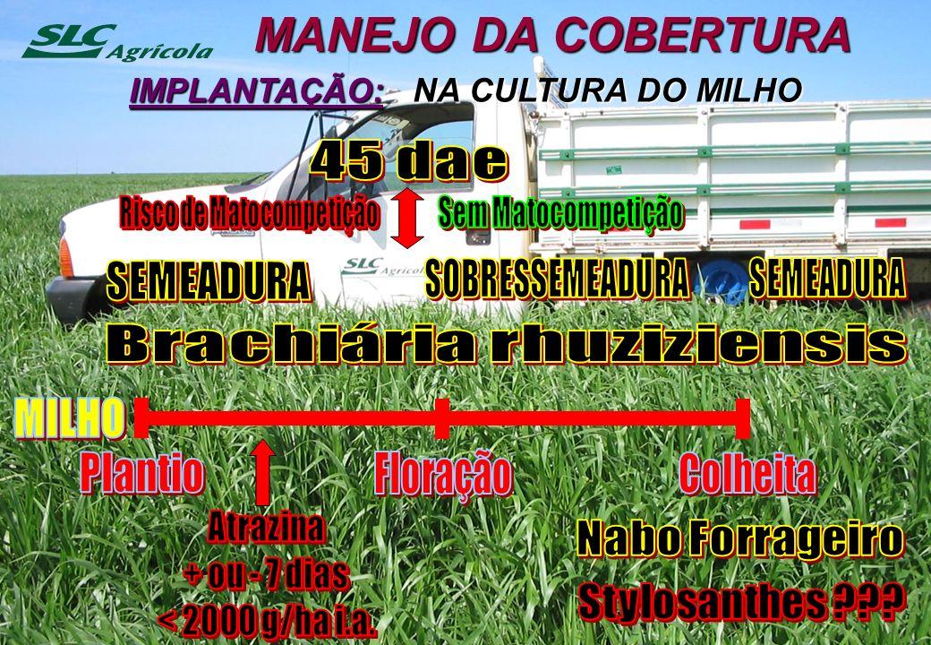 MANEJO DA COBERTURA IMPLANTAÇÃO: NA CULTURA DO MILHO