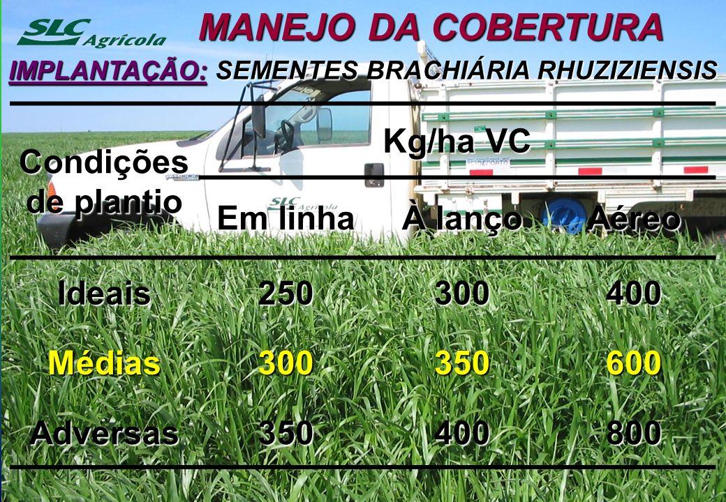 MANEJO DA COBERTURA IMPLANTAÇÃO: SEMENTES BRACHIÁRIA RHUZIZIENSIS Condições de plantio Kg/ha VC Em linha À lanço Aéreo Ideais250300400 Médias300350600